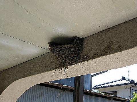 ツバメの巣